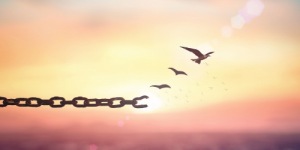 chains turning into birds